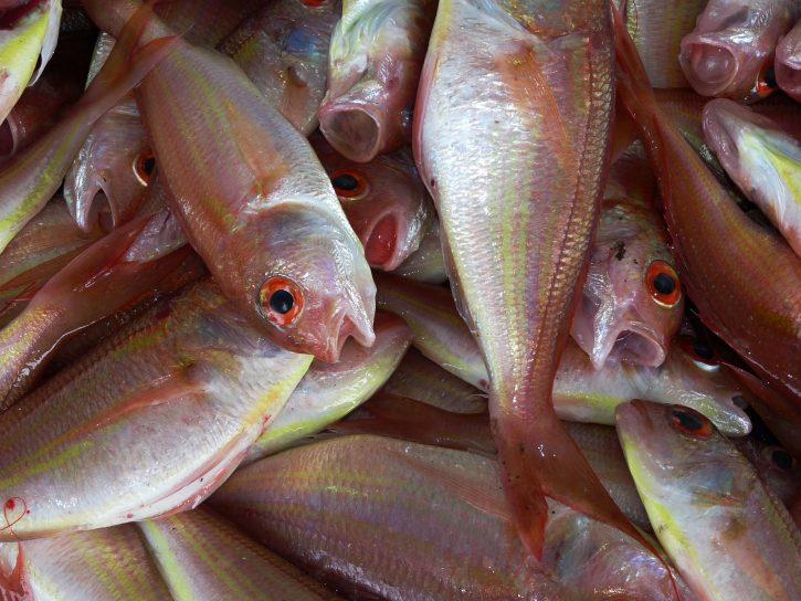 fish-234677_1920